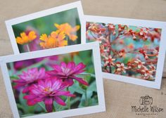 Flower Garden Card Pack... 3 cards...Indian Blanket, Tiny Flowers and Hot Pink Zinnia...Fine Art Photography Greeting Cards