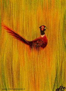 ACEO/ATC Campagna lomellina - Lomellina country. Fagiano. Pheasant. ORIGINAL