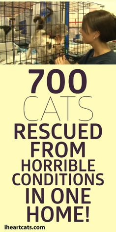 700 Cats Rescued From One Home!