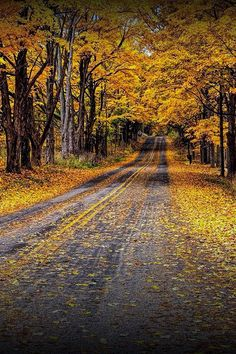 Fall Rural Country Road with Autumn Colored Leaves in Southwest Michigan - A Autumn Nature Landscape Photograph Autumn Scenes, Autumn Aesthetic, Autumn Cozy, Autumn Nature, Fall Wallpaper, Autumn Photography, Fall Pictures, Autumn Inspiration, Landscape Photographers