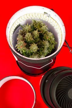 How to grow with LEDs and stacked buckets Within.