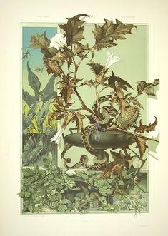 marinni | Anton Seder.Art Nouveau Prints.Часть 2.