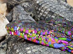 Rainbow Crocodile