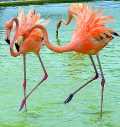 flamingo art - Google Search