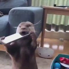 funny videos Pls dm for credit or removal. Cute Funny Animals, Cute Baby Animals, Funny Cute, Animals And Pets, Cute Dogs, Otters Funny, Cute Animal Videos, Funny Animal Pictures, Animal Fun