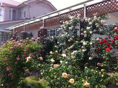 土間のある家    http://www.ksdf.info/施工事例/2010土間のある家/