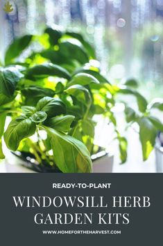 13 Window Sill Herb Garden Kits for Growing Kitchen Herbs - Home for the Harvest - indoor herb gardens for beginner gardeners and plant lovers #garden #plants #nature #herbs #cooking