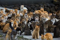 A group of cats is called a Clowder - Photo by Thomas Peter Baby Cats, Cats And Kittens, Bebe Logo, Cute Cats, Funny Cats, Group Of Cats, Ehime, Cat City, Sleeping Kitten