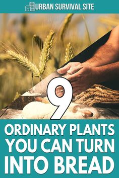You can make flour from many wild plants, and it can offer more nutrition and flavor than most store-bought flour.
