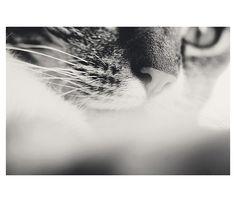 Cat Black and White Print