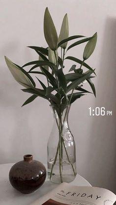 Bloom Baby, Instagram Story Ideas, Aesthetic Pictures, Bedroom Decor, Bedroom Lighting, Bedroom Ideas, Wallpaper S, Flora, Interior Decorating