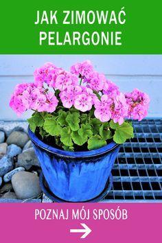 Potted Plants, Garden Plants, Kitchen Organisation, Geraniums, Flora, Backyard, Crafts, Youtube, Flowers