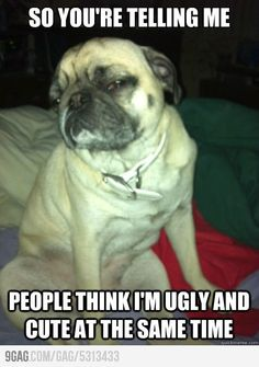 haha so true.i love pugs lmao. my ex has a pug. so cute Cute Pugs, Cute Puppies, Dogs And Puppies, Doggies, Adorable Dogs, Funny Dogs, Funny Animals, Cute Animals, Animal Funnies