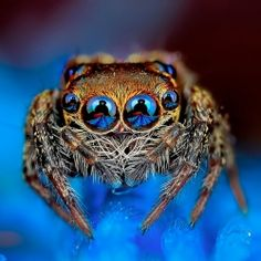 Beautiful macrophotography from Jimmy Kong. We especially love looking into the eyes of those jumping spiders!