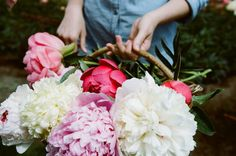 Transplant Peonies during late fall because the roots can grow in the winter and they benefit from the frost.