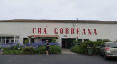 Cha Gorreana Tea Plantation Sao Miguel Azores