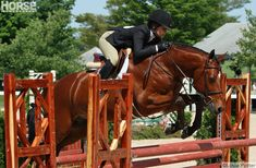 9 basic philosophies to keep in mind when jumping your horse.