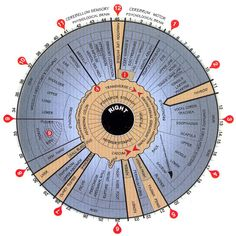 Iridology chart: how to read the iris of an eye. Laminated poster: 24.95 Great site for all kinds of metaphysical charts