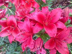 A Quilt and A Prayer - oriental lillies