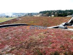 Nasz ekologiczny dach.  #ekologia #podhale
