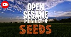 Open Sesame shows the importance of saving seeds, which are in danger of disappearing because of agrichemical monopolies, GMOs, and gene patenting. http://articles.mercola.com/sites/articles/archive/2015/04/25/seed-saving.aspx