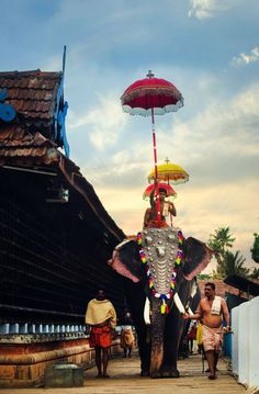 Walking Tall - During the Utsavam at Koodalmanikyam Temple, Kerala Kerala Travel, India Travel, Kerala India, South India, India Asia, Image Elephant, Elephant India, Indian Elephant, Namaste