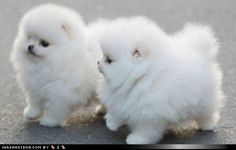 cute and oh so fluffy!!