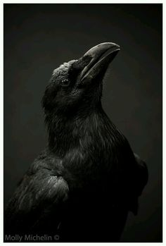 Ravens in the Eyes