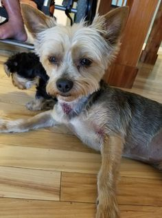 """""""Please pray for our Cooper. He was attacked by a Pit Bull today that came in our car after him at Abi's friends house. He is bitten up bad but thank goodness he wasn't killed or hurt worse  and Abi wasn't hurt trying to break them up. She got bit on her finger but thankfully it wasn't any worse than it was."""""""