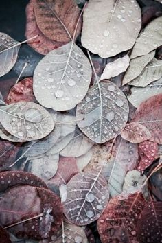 Assorted leaves