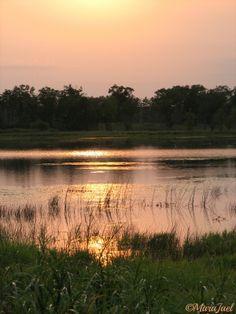 New blog post on The Ornery Biologist ~ Sunset Migration  www.ornerybiologist.com
