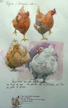 Yal Watercolor Sketchbook, Watercolor Bird, Watercolor Animals, Watercolor Paintings, Watercolors, Rooster Painting, Rooster Art, Chicken Painting, Chicken Art