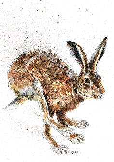 Limited Edition Giclee Print of 'Hoppidy Hop' Hare (edition of Rabbit Drawing, Rabbit Art, Hare Pictures, Animal Pictures, Cartoon Drawings, Animal Drawings, Pencil Drawings, Hare Illustration, Illustrations