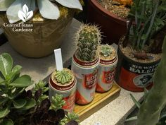 Clever ideas for succulent containers designed by Eric Pedley and friends at East Austin Succulents.