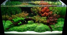Aquariums: Fresh Aquascaping Designs Winter Approaching Layout Ideas
