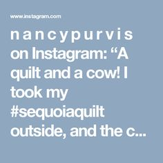 """n a n c y  p u r v i s on Instagram: """"A quilt and a cow!  I took my #sequoiaquilt outside, and the cows were actually a bit curious. @robertkaufman ☺Pattern found in…"""""""