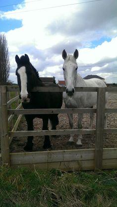 My beautiful horsey friends.