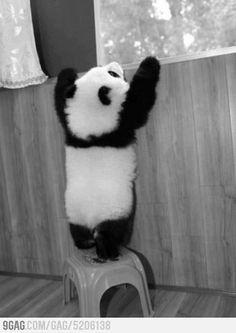 Panda fuzzy butt