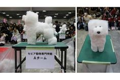 Dogs shaved into cubes: New Japanese trend. Because sure, why not. Also don't they look like Minecraft dogs?  Click through to see more.