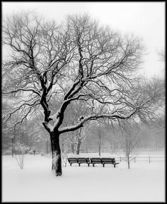 Who knew a tree with no leaves could be so beautiful.  Peaceful winter scene with tree and bench.
