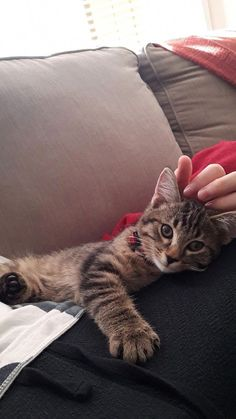 After moving out of my parents' and suffering 4 months of cat withdrawals, we adopted Rengar! After moving out of my parents' and suffering 4 months of cat withdrawals, we adopted Rengar! Cute Kittens, Kittens And Puppies, Cats And Kittens, Tabby Cats, Pretty Cats, Beautiful Cats, Beautiful Pictures, I Love Cats, Crazy Cats