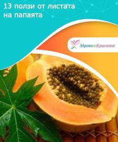 13 ползи от листата на папаята  Листата на папаята са изключително полезни за здравето. В тази статия ще разберете защо и как да ги използвате.