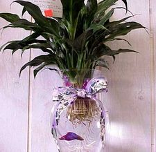 Betta Fish Vase with plant...Made some of these for xmas gifts last year, I love them! :)