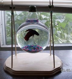 Light Bulb Fish Bowl!  Recycle Your Blown-Out Light Bulbs!  (Please use only very clean XLARGE bulbs for this DIY project. Keep in mind, pet shops use very small 8 - 12 oz containers for Bettas. These light bulbs are a half quart or more.)
