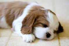 35 Sleeping Puppies Who Physically Can't Handle Their Own Cuteness