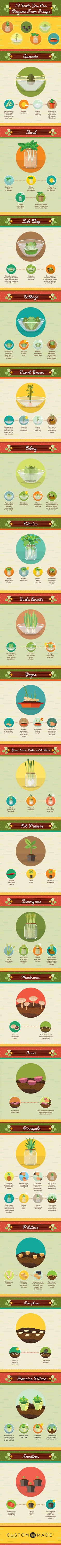 19 Foods You Can Regrow From Scraps PreparednessMama Growing Plants, Growing Vegetables, Vegetable Garden, Garden Plants, Organic Gardening, Gardening Tips, Indoor Gardening, Grow Your Own Food, Food Waste