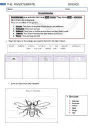 vertebrates and invertebrates worksheets for grade 2 education pinterest worksheets. Black Bedroom Furniture Sets. Home Design Ideas