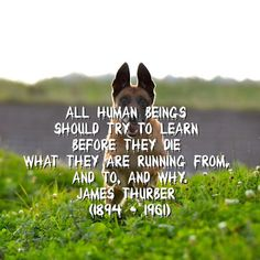 Runderdog: Runleashed and Runstoppable: Purpose is paramount for pursuing the prize - - Steps Quotes, James Thurber, Stranger Danger, Running Quotes, Fiction And Nonfiction, Running Inspiration, Writing Poetry, Safety And Security, Mystery Thriller