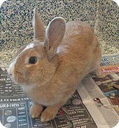 Golden, CO - Rex Mix. Meet Roger a Pet for Adoption.