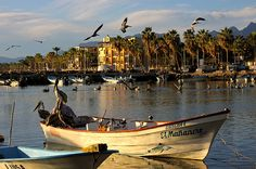 http://fineartamerica.com/featured/pelican-panga-kandy-hurley.html Kandy Hurley